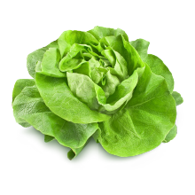 Salade culture conventionnelle