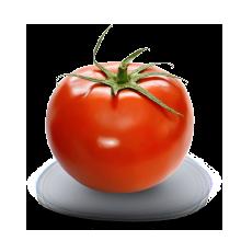 Tomate culture conventionnelle